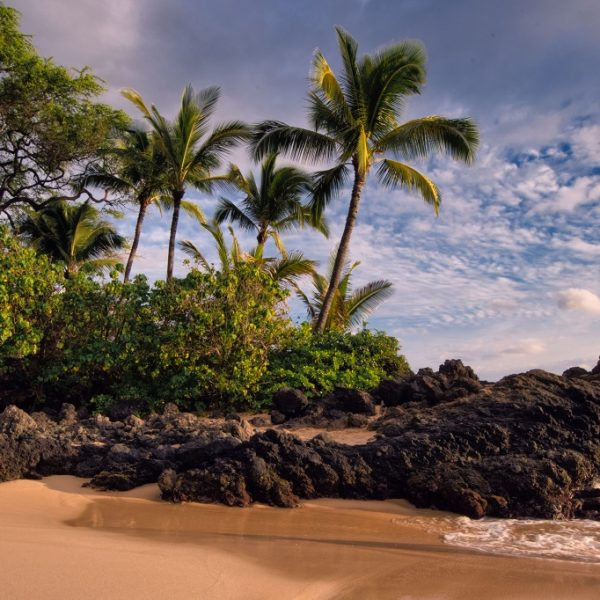 Beyond the Palm Trees: Local Action Key to Fast, Affordable and Reliable Internet Solutions in Rural Hawai'i Thumbnail